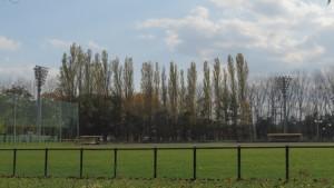 野球場とポプラの木立