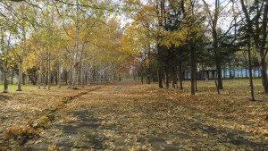 散策路と黄葉