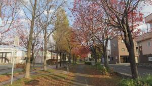 散策路とベンチ(屯田緑道)