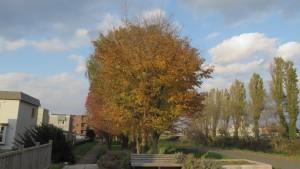 ポプラと黄葉の木立