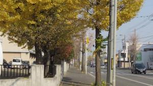 三角点通のイチョウ並木の黄葉