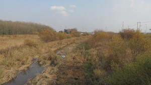 大野地4の橋から篠路新川上流を望む