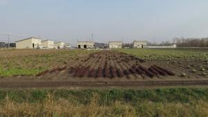 収穫中の畑