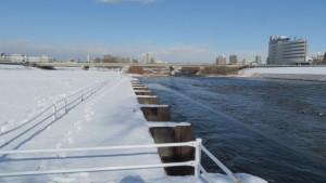 豊平川からの取水口と南19条大橋