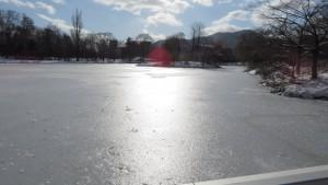 凍り付いた菖蒲池