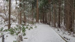 円山公園内の木道