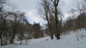 雪の残る巨木の谷