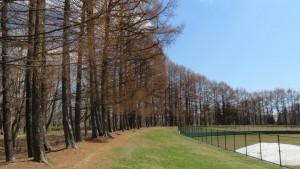 野球場を囲むカラマツ並木