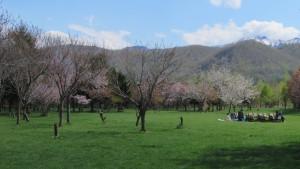 花見広場と手稲山