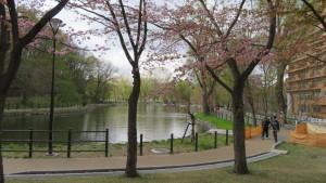 桜とボート池