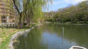 シダレヤナギとボート池