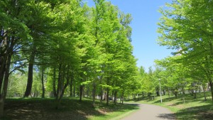 新緑と散策路