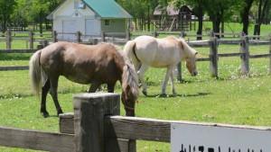 放牧中の馬