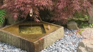 手水鉢とスズメ