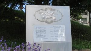 「ラベンダー発祥の地」記念碑