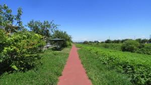 中の川緑地の散策路