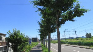鉄工団地通のイチョウ並木