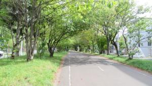 エゾヤマザクラの並木とサイクリングロード