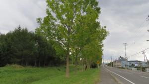 市道山本線とヤチダモ並木