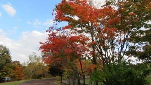 散策路とヤマモミジの紅葉