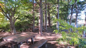 ベンチと木立