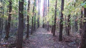 木立の間の散策路
