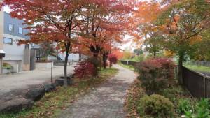 精進川緑地散策路の紅葉