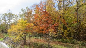 精進川左岸の紅葉