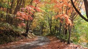 紅桜公園散策路の紅葉