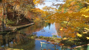 釣り堀と黄葉