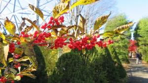 ウメモドキの赤い果実