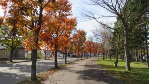 アカナラ並木の紅葉