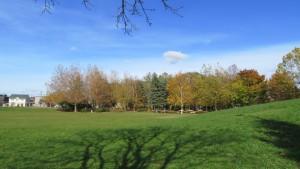 あいの里西公園と黄葉の木立