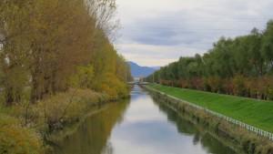 創成川とポプラ並木の黄葉