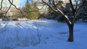 氷の張った道庁南の池