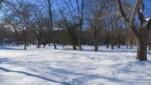 雪の中のハルニレの木立と農学部校舎