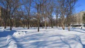 雪の「エルムの森」と理学部校舎