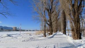 雪の第一農場とポプラ並木