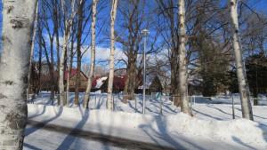シラカバの木立と重要文化財「札幌農学校第2農場の建物群」