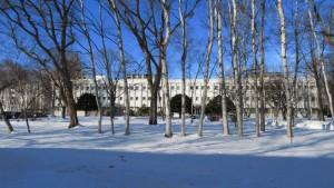 シラカバの木立と低温科学研究所