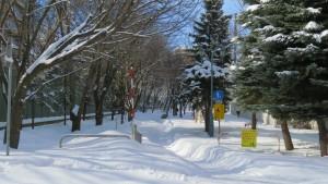 雪の札幌桑園停車場緑道線
