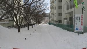 雪の旧界川遊歩道とサクラ並木