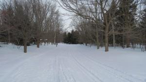 林の中のスキーコースと散策路