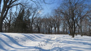 月寒公園 「くつろぎの森」と園路
