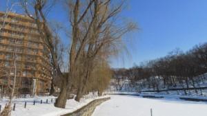 月寒公園 ボート池とシダレヤナギ並木