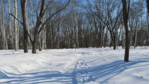 月寒公園 「散策の森」と園路