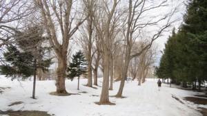 雪の園路と歩くスキーコース