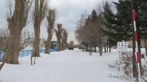 雪の園路とポプラ並木