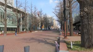 北3条広場とイチョウ並木