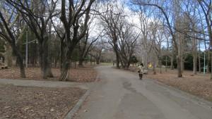園路と公園の木立